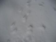061209雪上の脚跡@エコカフェ企業環境研修(裏磐梯) 029.jpg