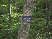 071012アオハダ樹肌@エコカフェ白神山地 035.jpg