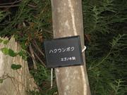 071012ハクウンボク看板@エコカフェ(白神山地) 103.jpg