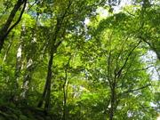071012落葉樹の森@エコカフェ白神山地 138.jpg