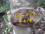 080101小笠原(お正月) 116.jpg