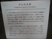 080725アシウスギ解説@エコカフェ(芦生公開講座) 134.jpg