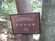 080927ナツツバキ看板@エコカフェ第2回自然観察会(三頭山) 056.jpg
