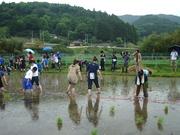 090524小雨の中の田植え@エコカフェ.JPG