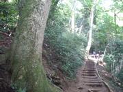 090906モミの樹幹@エコカフェ.JPG
