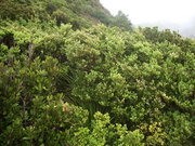 100507乾性低木林(北西側)@長崎展望台.JPG