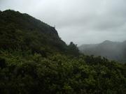 100507乾性低木林(東南側)@長崎展望台.JPG