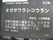 120102オガサワラシコウラン看板@エコカフェ.JPG