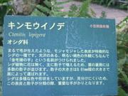 120211キンモウイノデ案内板@エコカフェ.JPG