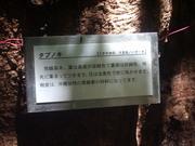 120722タブノキ看板@エコカフェ(沖縄).JPG