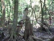 120728折樹とつる植物@エコカフェ.JPG