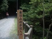 120728遊歩道わきのタラノキ@エコカフェ(春日山).JPG