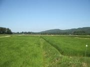 120803田園風景2@エコカフェ(佐渡島).JPG