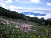 120816チングルマ@エコカフェ(木曽駒ケ岳).JPG