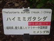 120922ハイミミガタシダ看板@エコカフェ.JPG