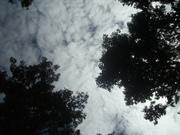 120929頭上の雲@エコカフェ.JPG