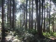 121027杉二次林@エコカフェ(弓張山).JPG