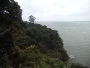 121117江ノ島北側の海岸林@エコカフェ(江ノ島).JPG