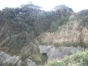 121117江ノ島南側断崖の海岸林@エコカフェ(江ノ島).JPG
