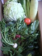 121209冬野菜たち@エコカフェ.JPG