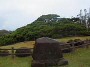 121930五枝の松@エコカフェ(久米島).JPG