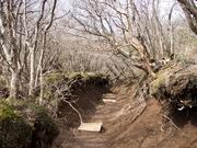 130323登山道@エコカフェ第13回自然観察会in箱根_s37.jpg