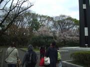 130330憲政記念館花見@エコカフェ.JPG