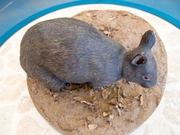 130411アマミノクロウサギのデコイ@エコカフェ奄美大島エコツアー_79_s.jpg