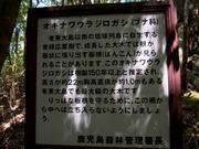 130411オキナワウラジロガシ看板@エコカフェ奄美大島エコツアー_290_s.jpg