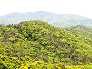 130411亜熱帯照葉樹林の森@エコカフェ奄美大島エコツアー_465s.jpg