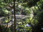 130505ひょうたん池の緑@エコカフェ.JPG