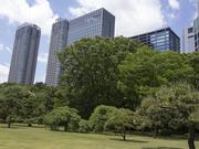 130512浜離宮と高層ビル群@エコカフェ.jpg
