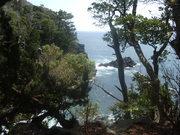 130608海浜植物群落@エコカフェ.JPG