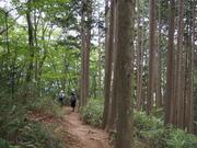 130720スギ二次林の中の登山道@エコカフェ.JPG