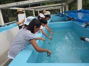130804稚ガメの入水@エコカフェ.JPG