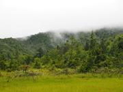 130908姫田代周辺の森@エコカフェ(桧枝岐村).JPG