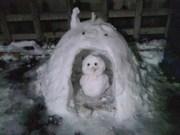 140209かまくらと雪だるま@エコカフェ.jpg