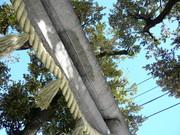 140216中野氷川神社鳥居@エコカフェ.JPG