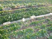 140309ミニ農園@エコカフェ.JPG