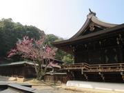 140318吉備津彦神社@青柳_n.jpg