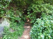 140531森林浴遊歩道入口@エコカフェ.JPG