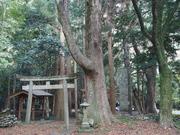141107下島最大のケヤキ@エコカフェ.JPG