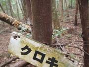 141108クロキ樹幹@エコカフェ.JPG