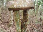141108モチノキ樹幹@エコカフェ.JPG
