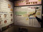 141109ツシマヤマネコ飼育下繁殖@エコカフェ.JPG