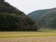 141109佐護地区水田風景@エコカフェ.JPG
