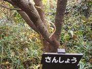 141130サンショウ樹皮@エコカフェ.JPG