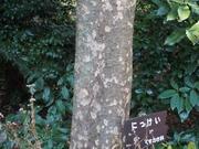 150111ニッケイ樹幹@エコカフェ.JPG