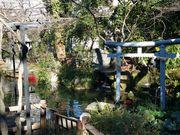 150124愛宕神社池@エコカフェ.jpg