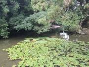 150919栗林公園2@エコカフェ.jpg